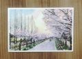 桜道ポストカード