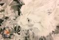 ネコ鉛筆画ポストカード(シャン)