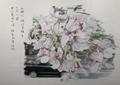 鉛筆画「葉桜」