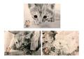 ネコ鉛筆画ポストカード3種セット